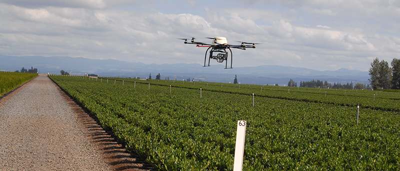 drone flying over nursery crops