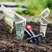 "money ""growing"" from the ground"