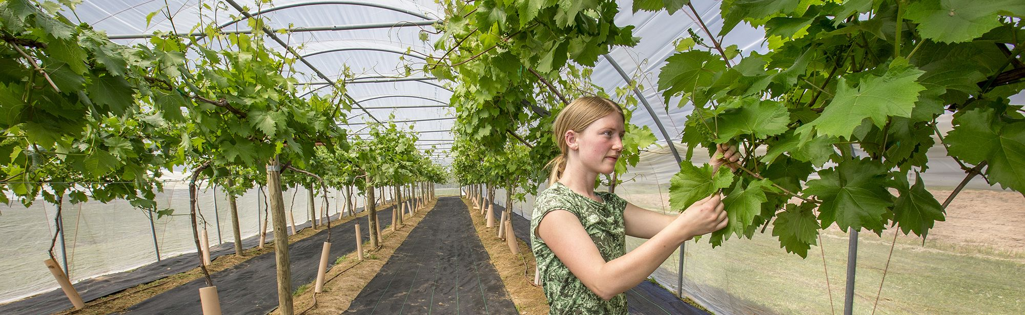 Olivia Callouet, horticulture student, tending the greenhouse